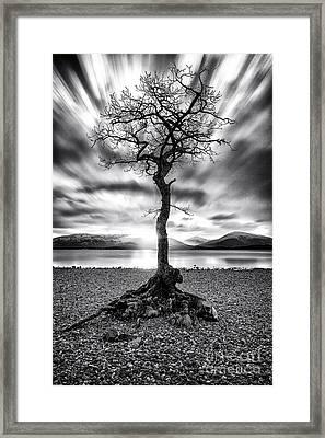 Millarochy Bay Tree Loch Lomond Framed Print by John Farnan