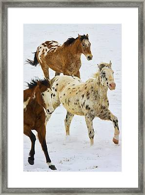 North America, Usa, Wyoming, Shell, Big Framed Print by Terry Eggers