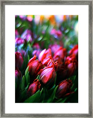 Parrot Tulips Framed Print by Jessica Jenney