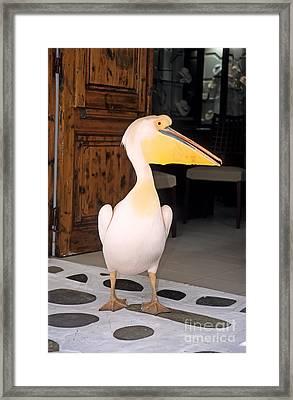 Pelican In Mykonos Town Framed Print by George Atsametakis