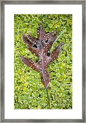 Plant Details Framed Print by Tim Hester