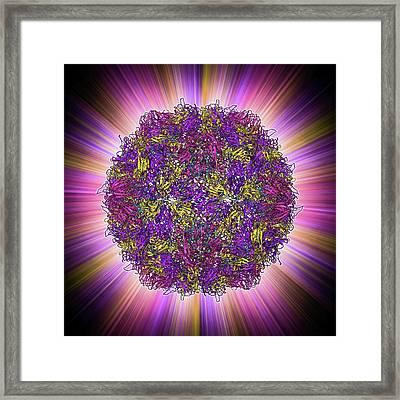 Poliovirus Particle Framed Print by Laguna Design