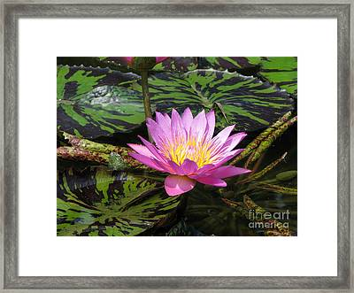 Pond Series Framed Print by Amanda Barcon