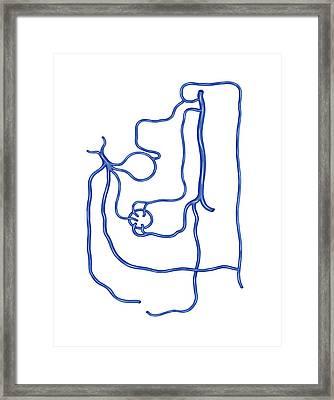 Portal Vein Network Framed Print by Asklepios Medical Atlas