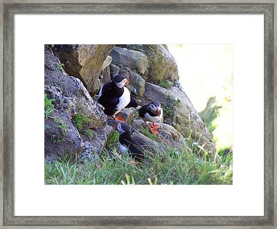 3 Puffins Framed Print by George Leask