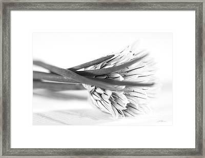 Purple Chive Flower Framed Print by Iris Richardson