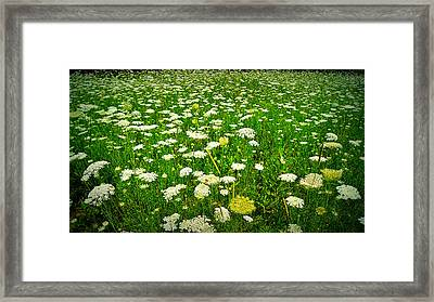Queen Annes Lace Framed Print by Carol Toepke