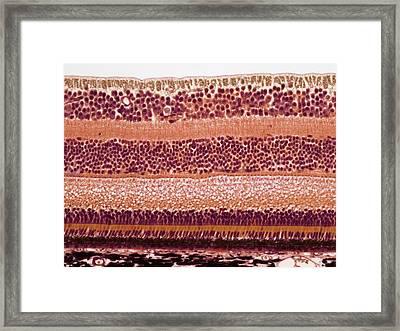 Retina Framed Print by Steve Gschmeissner