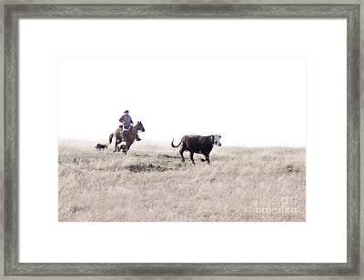 Round Up Framed Print by Cindy Singleton