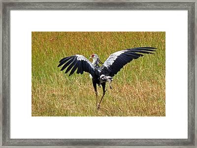 Secretary Bird Framed Print by Tony Murtagh
