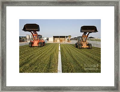 Silage Framed Print by PhotoStock-Israel