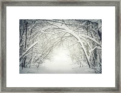 Snowy Winter Path In Forest Framed Print by Elena Elisseeva