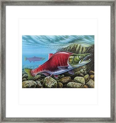 Sockeye Salmon Framed Print by JQ Licensing