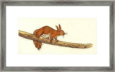 Squirrel Framed Print by Juan  Bosco