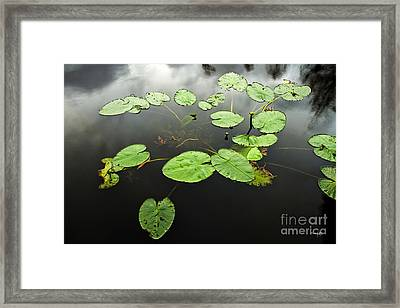 Stillness Framed Print by Scott Pellegrin