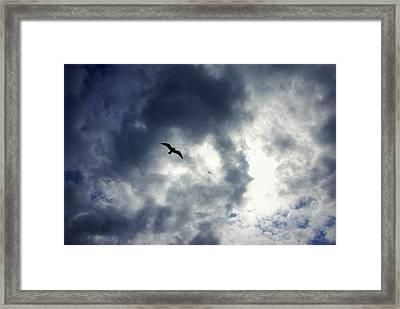 Storm Flyer Framed Print by Marilyn Wilson