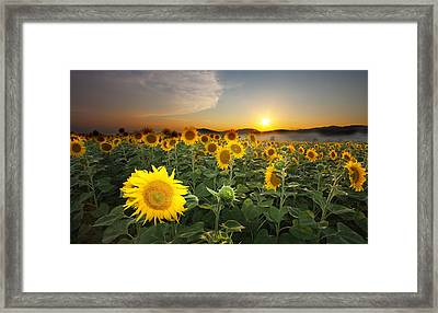 Summer Morning Framed Print by Mircea Costina Photography
