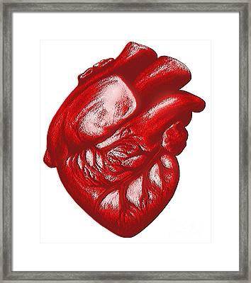 The Human Heart Framed Print by Dennis Potokar