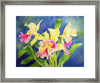 Three Cattleya's Framed Print by Kathleen Rutten