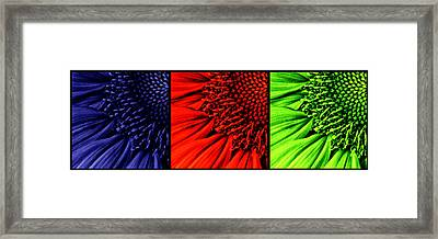 3 Tile Sunflower Colors Framed Print by Mark Kiver