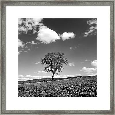 Tree Framed Print by Bernard Jaubert