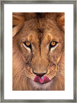 Usa, California, Los Angeles County Framed Print by Jaynes Gallery