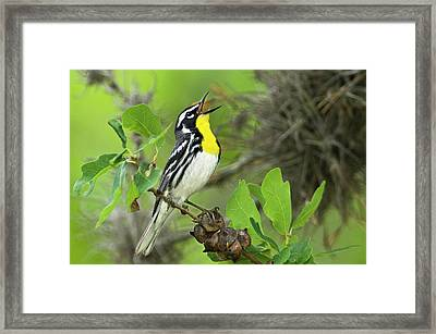Usa, Texas, Hill Country Framed Print by Jaynes Gallery