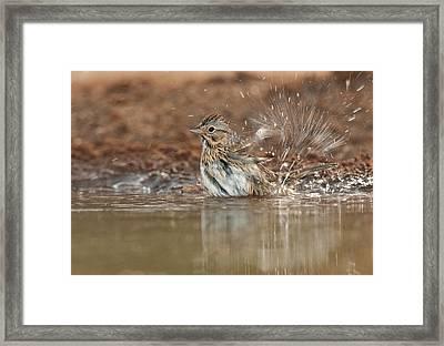 Usa, Texas, Santa Clara Ranch Framed Print by Jaynes Gallery