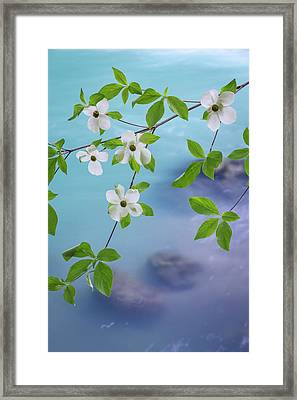Usa, Washington, Olympic National Forest Framed Print by Jaynes Gallery