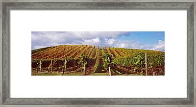 Vineyard At Napa Valley, California, Usa Framed Print by Panoramic Images