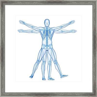 Vitruvian Man Skeleton Framed Print by Sebastian Kaulitzki