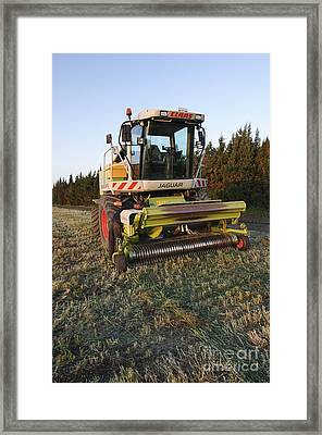 Wheat Harvest For Silage Framed Print by PhotoStock-Israel