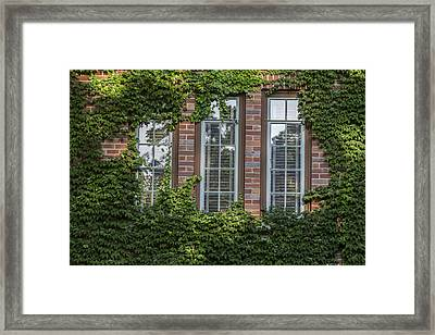 3 Windows And Ivy Framed Print by John McGraw