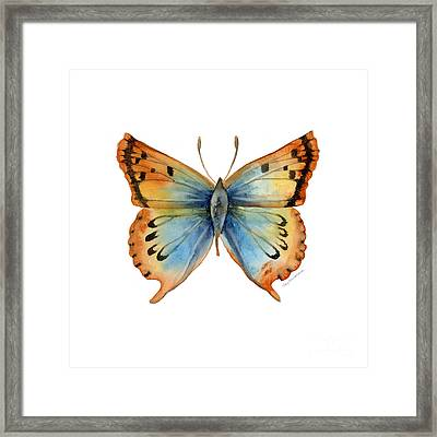 33 Opal Copper Butterfly Framed Print by Amy Kirkpatrick