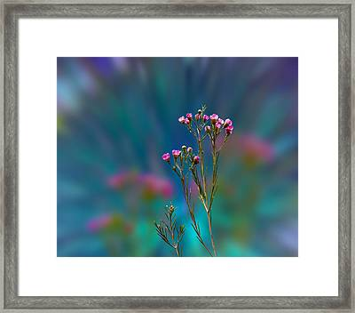 3398 Framed Print by Peter Holme III