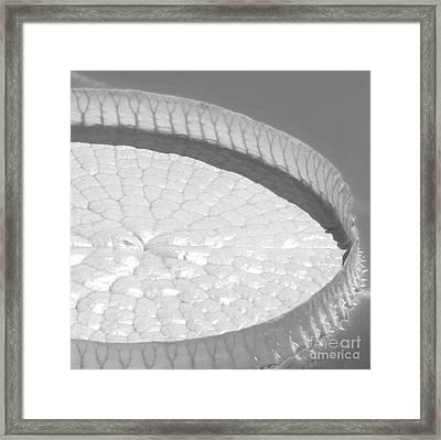 #3a Framed Print by Sabrina L Ryan