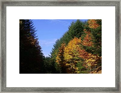 Autumn 9 Framed Print by J D Owen