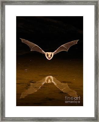 Big Brown Bat Framed Print by Scott Linstead