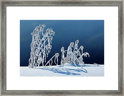 Canada, Manitoba, Whiteshell Provincial Framed Print by Jaynes Gallery