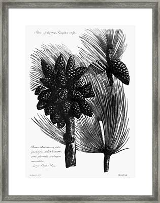 Catalogus Plantarum, 1730 Framed Print by Granger