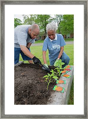 Community Gardening Framed Print by Jim West
