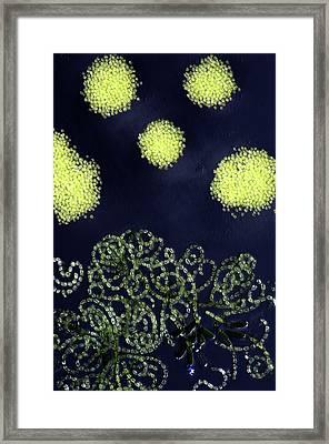 Cyanobacteria Framed Print by Marek Mis