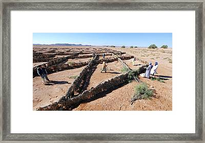 Desertification Prevention Framed Print by Thierry Berrod, Mona Lisa Production