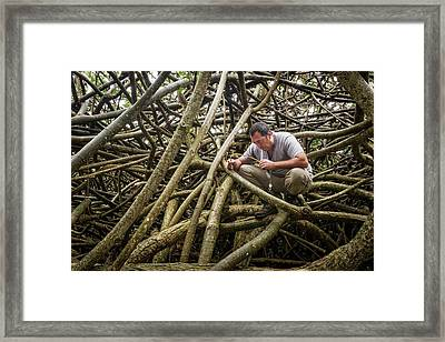 Entomology Field Research Framed Print by Philippe Psaila