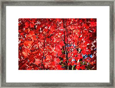 Fall Foliage Great Smoky Mountains Painted   Framed Print by Rich Franco