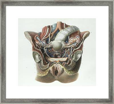 Female Reproductive System Framed Print by Science Photo Library