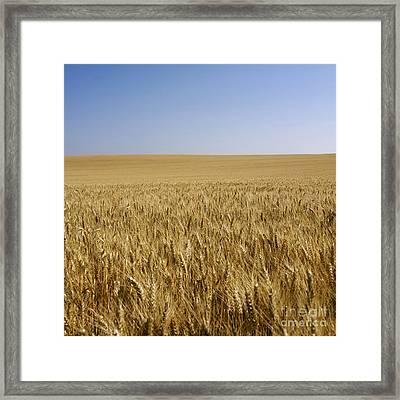Field Of Wheat Framed Print by Bernard Jaubert
