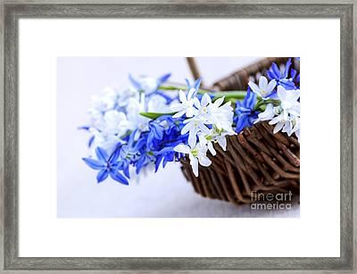 First Spring Flowers Framed Print by Elena Elisseeva