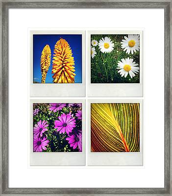 Flowers Framed Print by Les Cunliffe
