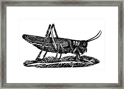 Grasshopper Framed Print by Granger